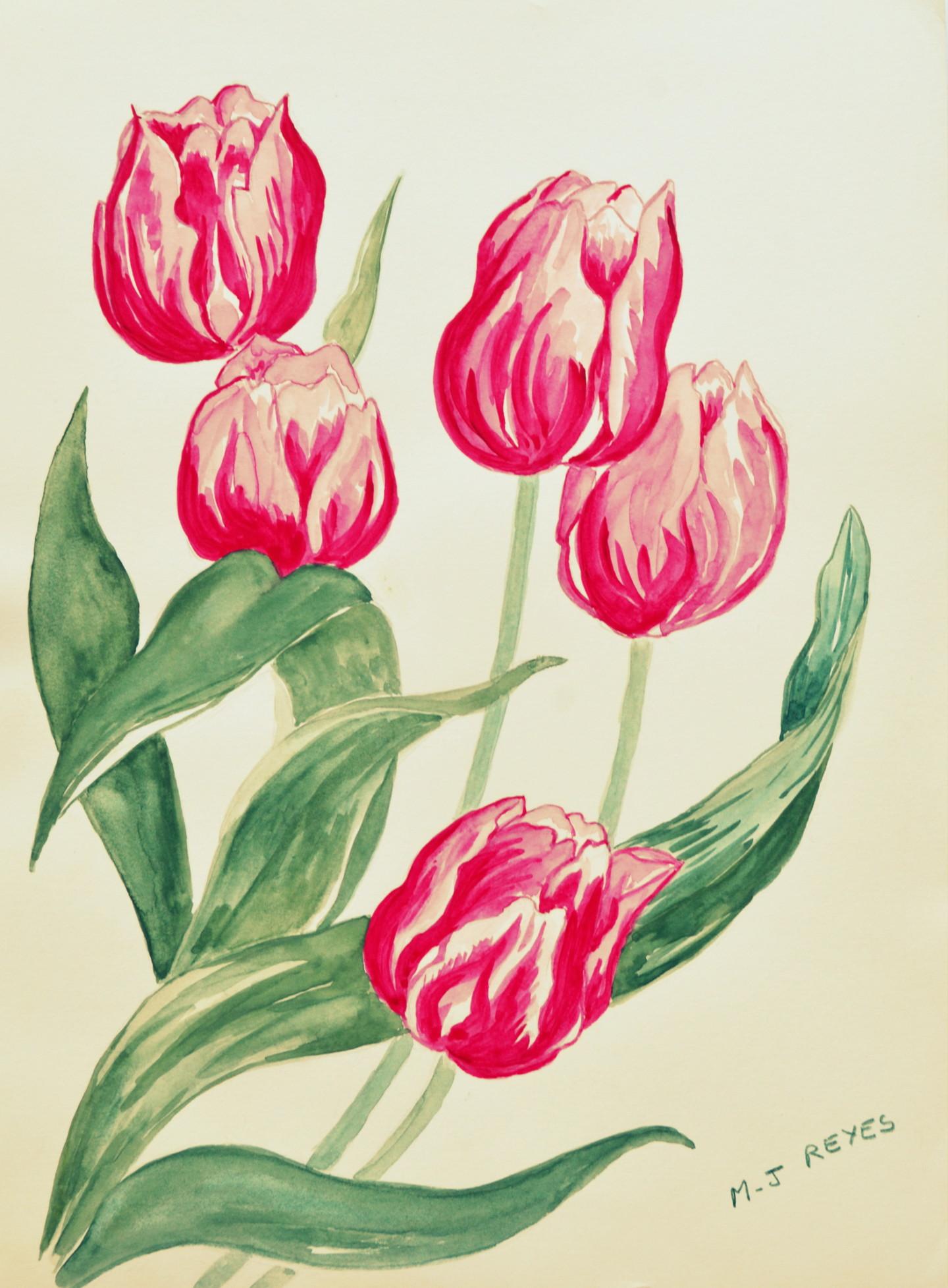 """Marie-Josée Reyes - Tulipes """"Flaming Flag"""""""