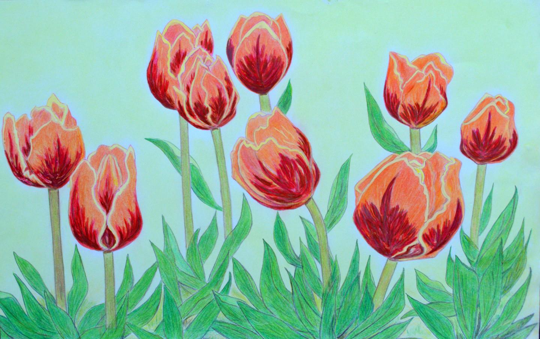Marie-Josée Reyes - Parterre de tulipes