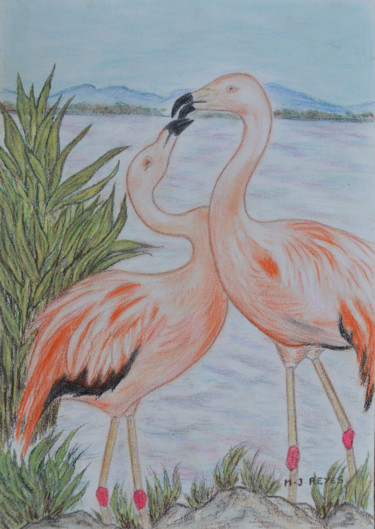 "Flamants roses  ""Parade amoureuse"""