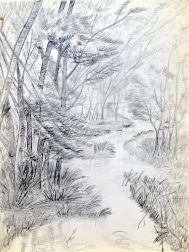 Rivière dans un sous-bois